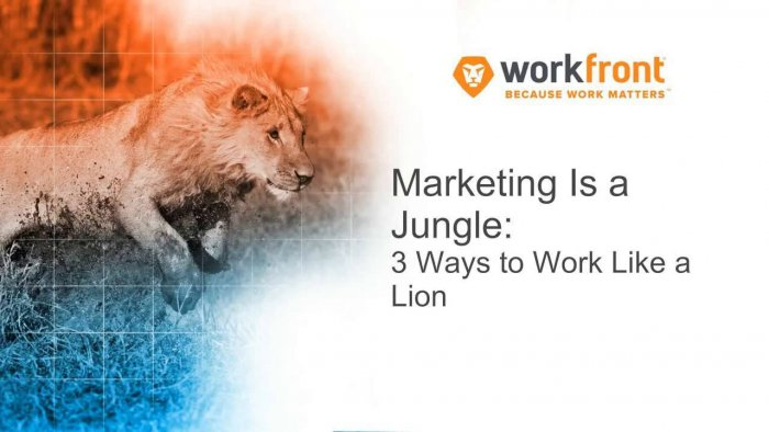 Marketing Is A Jungle: 3 Ways To Work Like A Lion
